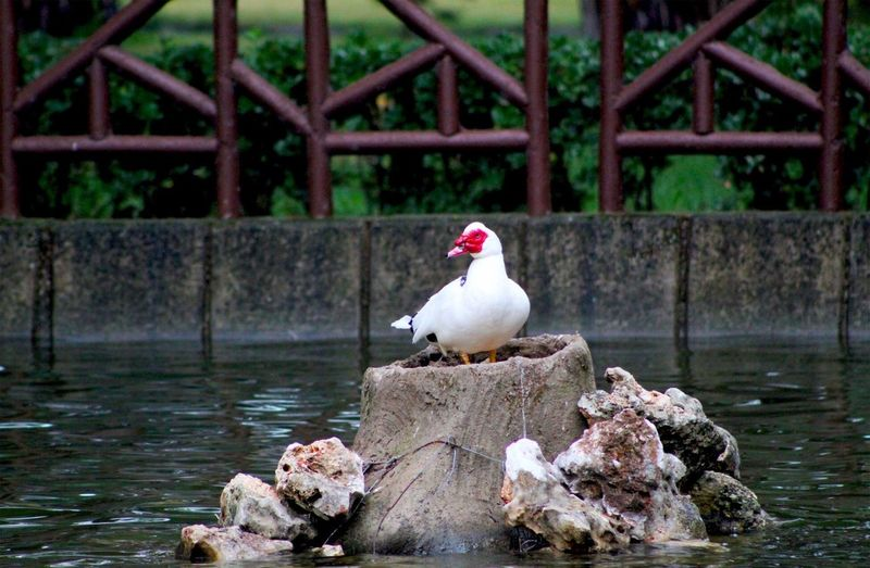 Seagull perching on a rock