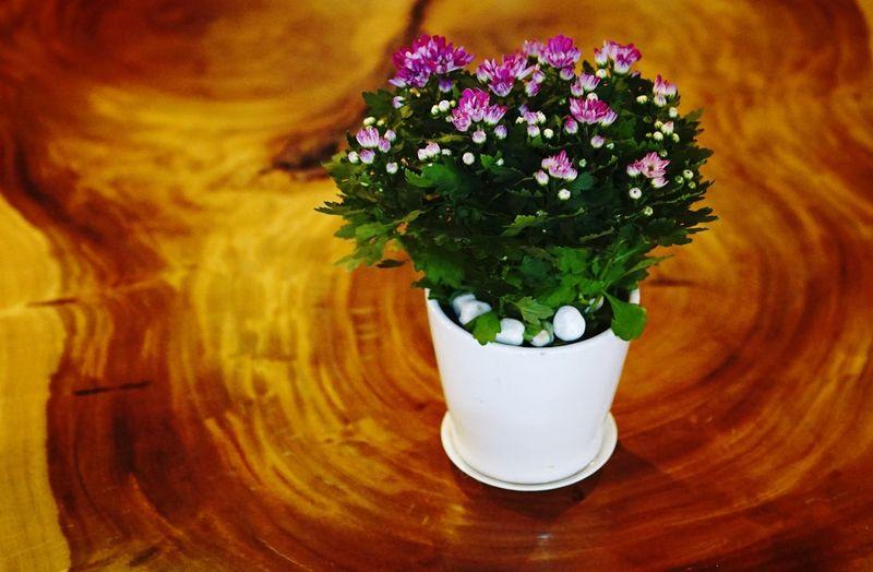 Flowers Still