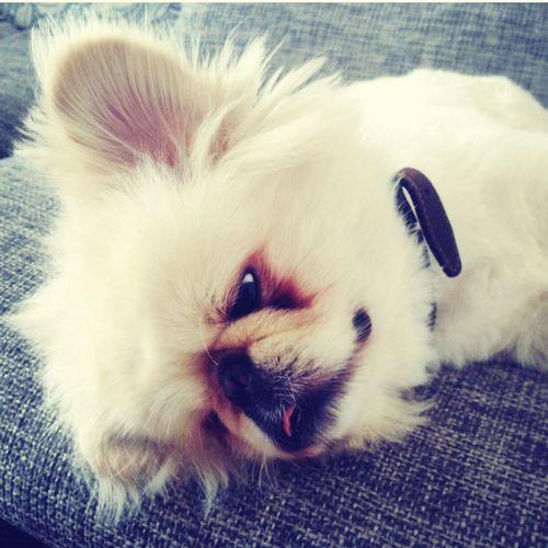My dog ? First Eyeem Photo