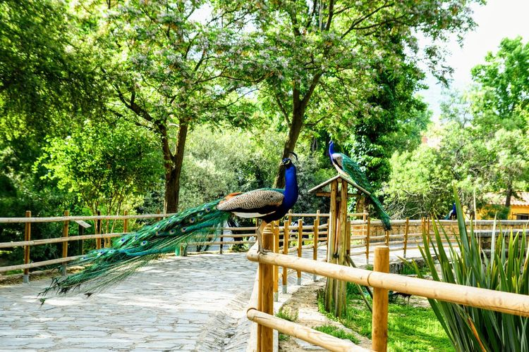 Tree Bird Railing Outdoor Play Equipment Playground