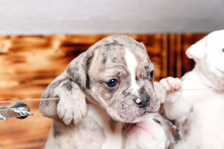 Close-up of hand holding puppy