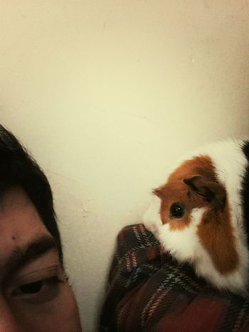 Relaxing Cobayo Cute Pets Friend <333