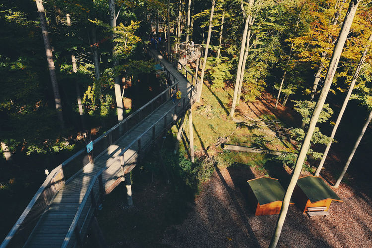 High angle view of staircase by trees