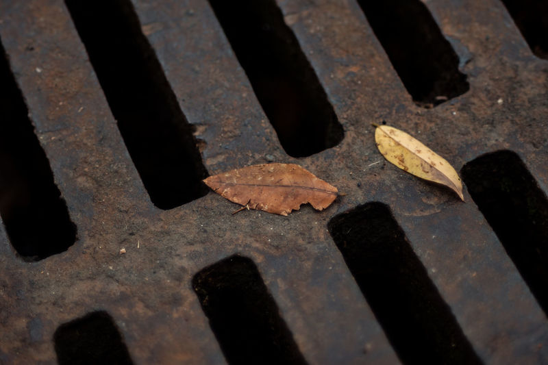 Autumn Leaves On Drainage Sewer Hatch With Grating Asphalt Autumn Autumn Colors Autumn Leaves Drain Drain Cover Hatch Rainy Days Backgrounds Cover Dirty Drainage Grating Grilled Leaf Leaves Manhole  Metal Grate Metal Structure Sewage Sewer Sewer Drain Street Streetphotography Surface Level