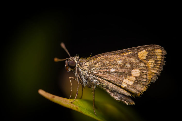Close-up of butterfly on leaf at night