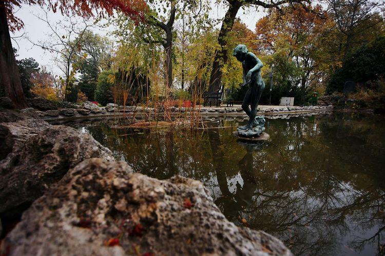 Water Outdoors Nature Tree Margaret Island Lake Statue Reflection Autumn