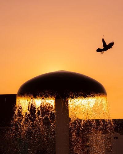 Silhouette bird flying against orange sky