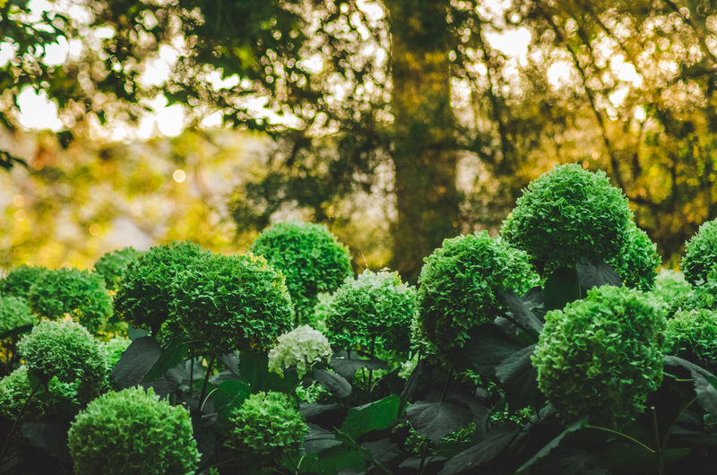 Close-up of fresh green plants against trees
