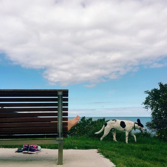 Dog taking a walk Animal Beach Bench Bench Cloud Cloud - Sky Cloudy Day Dog Dogs Exploring Grass Green Outdoors Park Pet Pets Real People Sitting Sky Sniffing Sniffing Around Tree Walking Walking Around