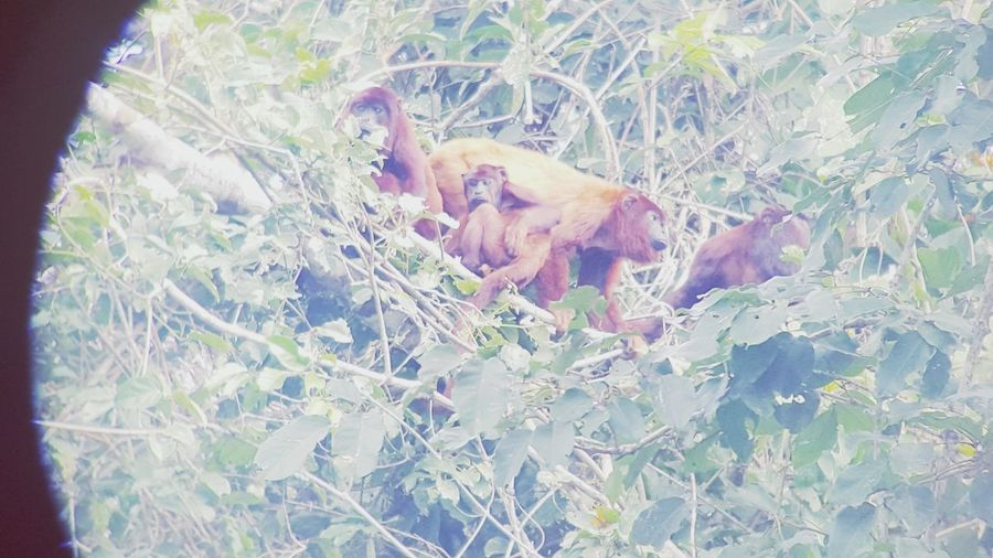 Monkey Monkeys Rule Amazone Jungle Travel Destinations Peruvian Peru Traveling Wildlife & Nature Wildlife Wildlife Photography Photography Beauty In Nature Animals In The Wild EyeEmNewHere