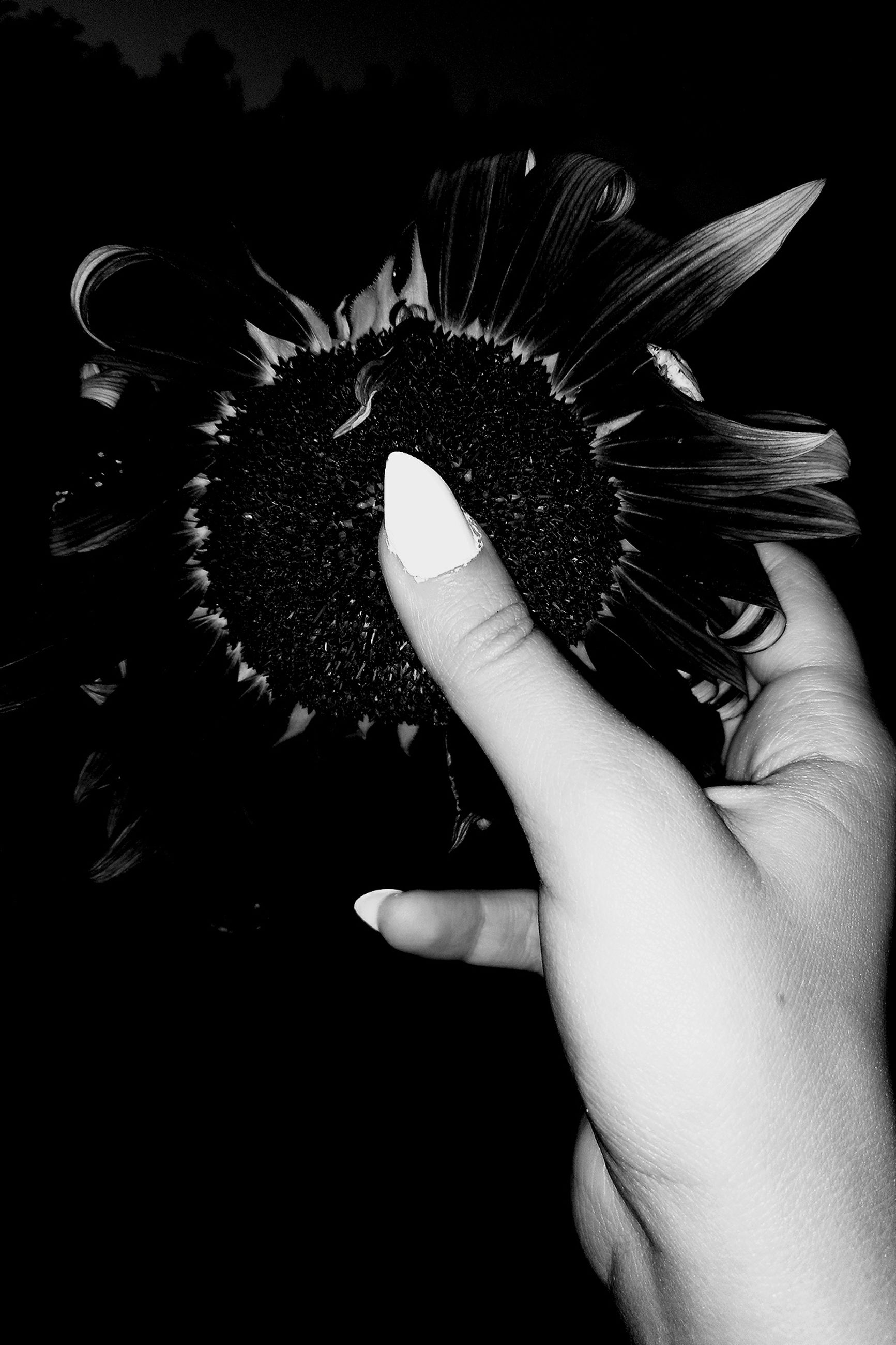 human hand, holding, one person, human body part, flower, real people, petal, close-up, flower head, indoors, fragility, black background, nature, freshness, day, people