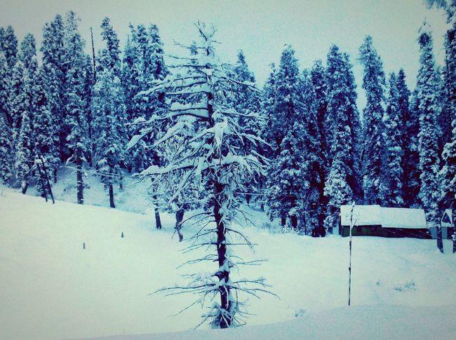 snowy morning in Himalaya