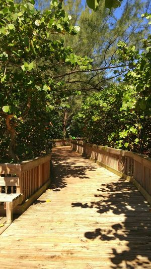 Boardwalk Hidden Path Trees Tropical Paradise Tropical Plants Colorful Nature Blue Sky Florida Beauty In Nature