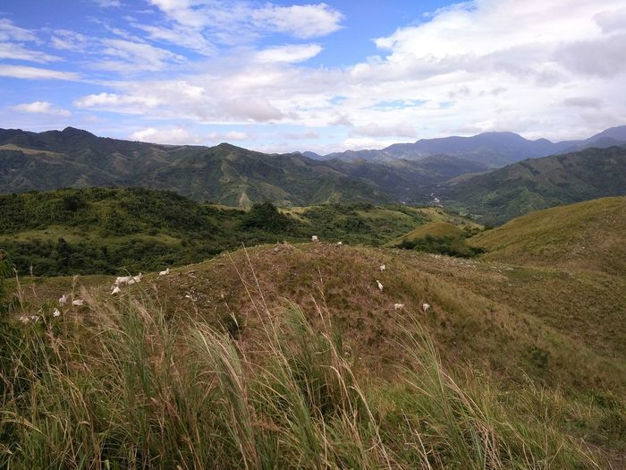 Mountain in rizal, philppines. Filled with white cows. Mountain Mountain Range Cloud - Sky Landscape No People Outdoors Beauty In Nature Scenics Nature