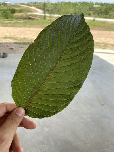 Close-up of hand holding leaf