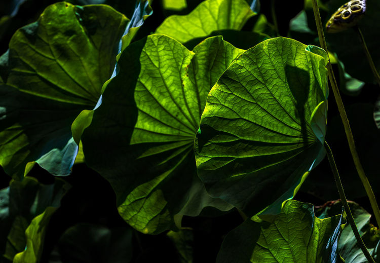 Aquatic plant Abstract Aquatic Plant Beauty In Nature Close-up Green Green Color Leaf Leaf Vein Leaves Natural Pattern Nature Plant Plant Part