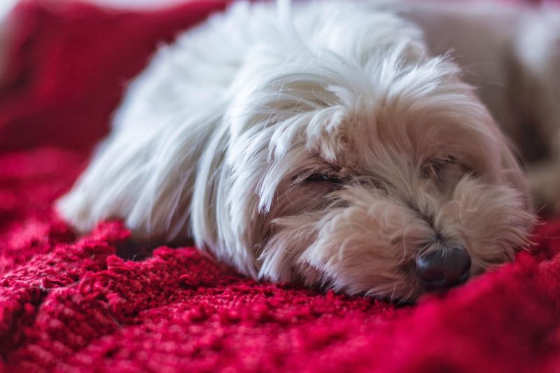Canine Dog Domestic One Animal Mammal Pets Domestic Animals Close-up Portrait My Best Photo
