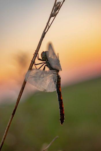 Awakening. Nature EyeEmNewHere Nature Photography Sunrise Dawn Full Length Insect Summer Close-up Animal Themes Sky Dragonfly Winged Dew Animal Wing Invertebrate