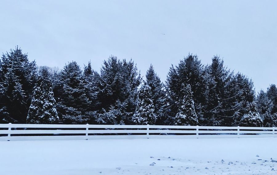 Early Morning Snow Snow Winter Cold Temperature Tree Nature Tranquility Beauty In Nature Tranquil Scene Weather No People Scenics Outdoors Landscape