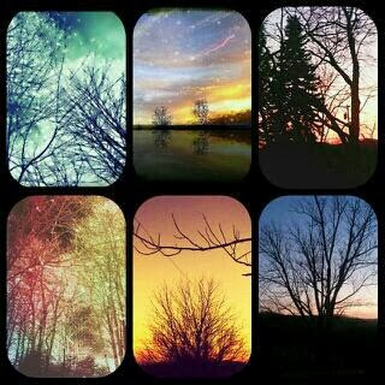bare tree, tree, branch, no people, autumn, outdoors, sunset, nature, multi colored, sky, day, beauty in nature