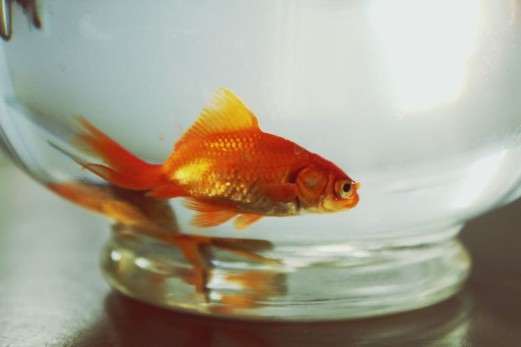 Close-up of fish swimming in bowl