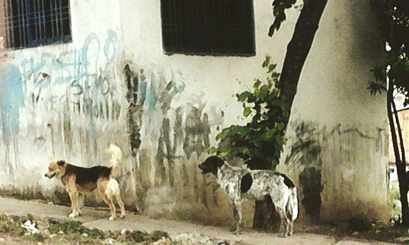 Guardianes siempre atentos. Vigilantes de cuatro patas Perro Caninos Vigilante Guardian Dia Noble