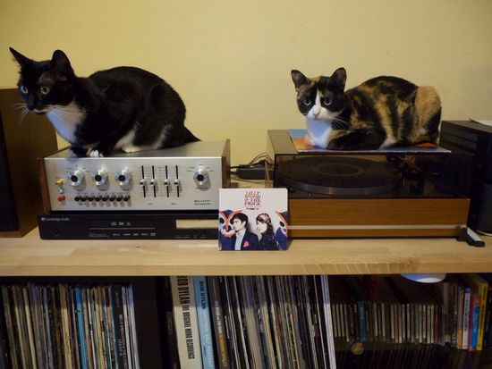 Cats Domestic Cat Pets Taking Photos Music