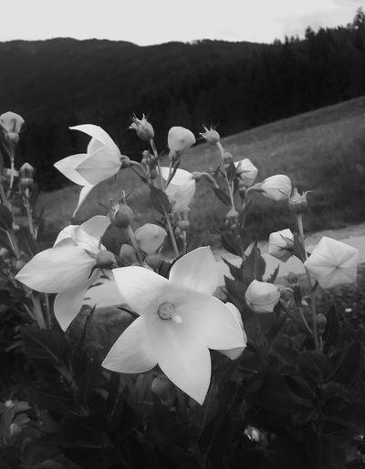 Tirol  Garden EyeEmNewHere Fresh Schwarzweiß No Colors