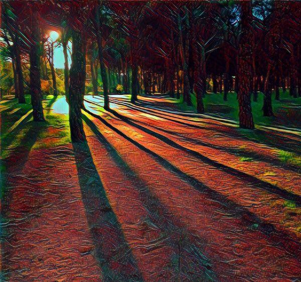 No People Outdoors Nature Tree Day ArtWork Art, Drawing, Creativity Bosque Bosquemagico Arboles Naturaleza Sunset Sunrise Shadows & Lights Green Color Red Color Sombras Arte Relaxation Relajación