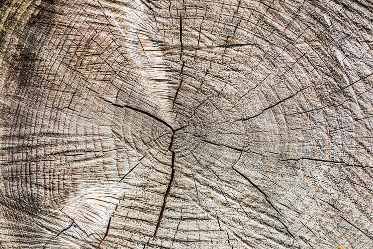 Backgrounds Brown Close-up Concentric Cracked Day Full Frame Nature No People Outdoors Pattern Textured  Timber Tree Tree Ring Tree Stump Wood - Material Wood Grain