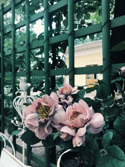 Plant Flowering Plant Growth Flower Beauty In Nature Nature Day No People Leaf Plant Part Close-up Tree Green Color Outdoors Freshness
