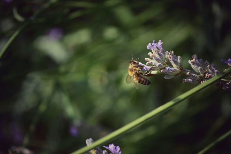 Close-Up Of Bee Perching On Flower