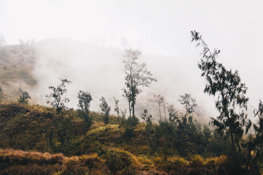 Beauty In Nature Day Fog Forest Growth Hazy  Landscape Mist Mountain Nature No People Outdoors Plant Scenics Sky Tranquil Scene Tranquility Tree