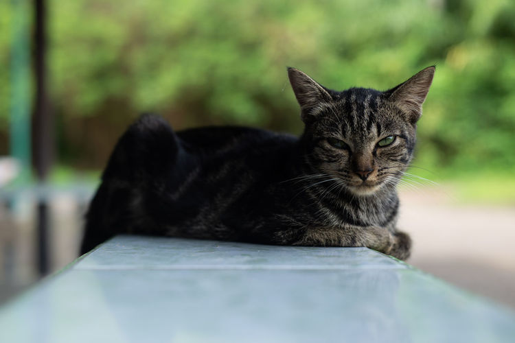 Close-up portrait of cat relaxing outdoors