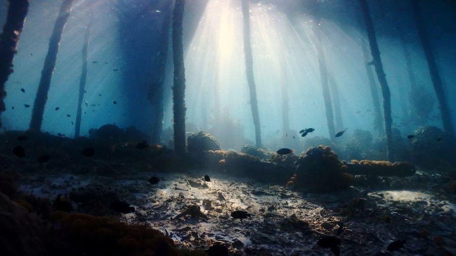 Diving Seascape