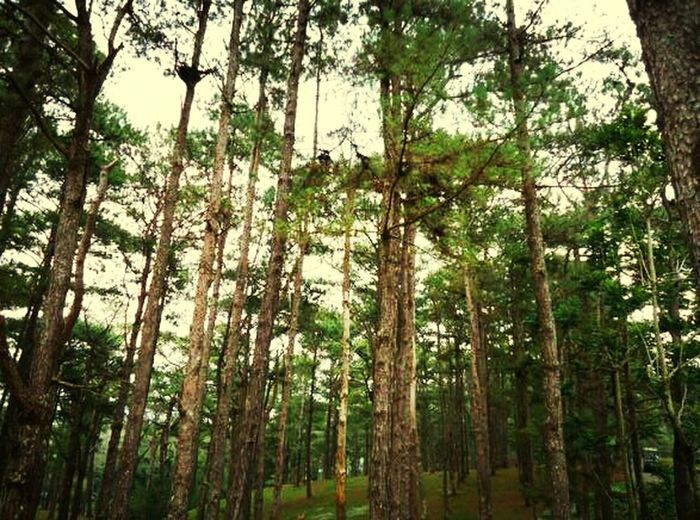 Trees Air Filters Things That Are Green Baguio City :)