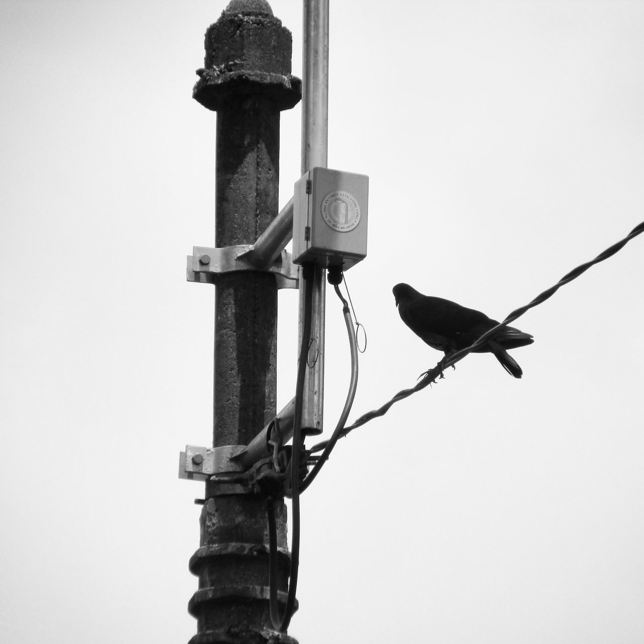 Pigeon Perching On Wire