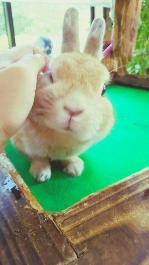 Rabbit うさぎ 長崎 Nagasaki 萌え First Eyeem Photo