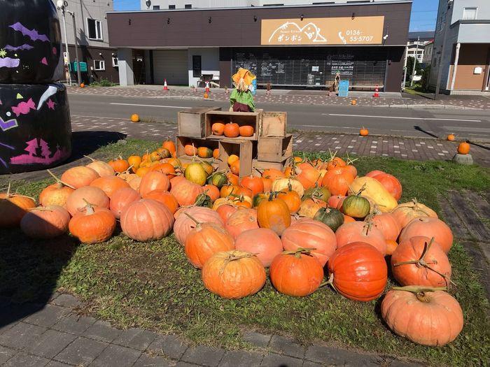 カボチャ🎃 Food Food And Drink Healthy Eating Fruit Freshness Orange Color Pumpkin Vegetable Sunlight Day Wellbeing