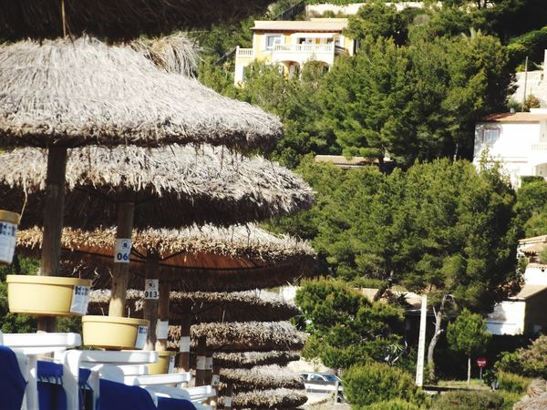 Schirme Mallorca Urlaub Strand Sonne eyeem hot Shot Travel Destinations Holiday Parasol Beach Mallorca Tree Plant Architecture Nature Built Structure Building Exterior Day No People Building Growth Thatched Roof Sunlight Outdoors Green Color House Roof Hanging Drying City