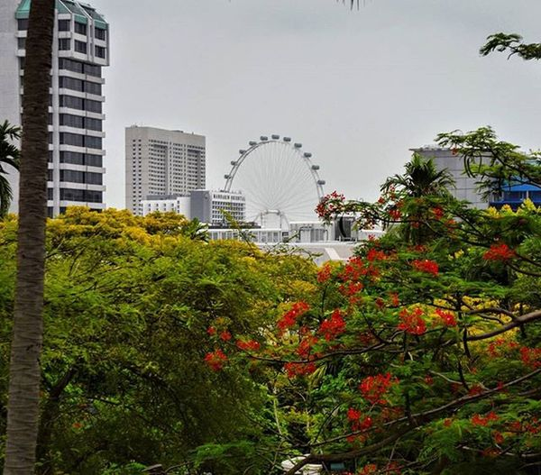 Lovely look at the Singapore ferris wheel standing tall. My Favorite Photo