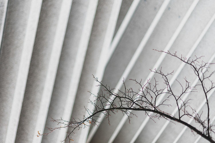 Low angle view of bare tree branches against abstract urban concrete fassade