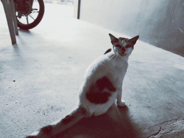 HuaweiP9plus Huaweiphotography Leicadualcamera Malaysia Cat Lovers Tiroi Seremban Mnhsight
