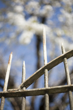 Close-up Day Iron Pines No People Outdoors Rust In Nature Rust On Flowers Traces Of Man In Nature Wire Rack