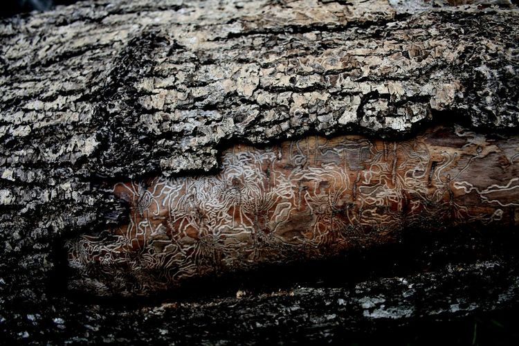Bark Close-up