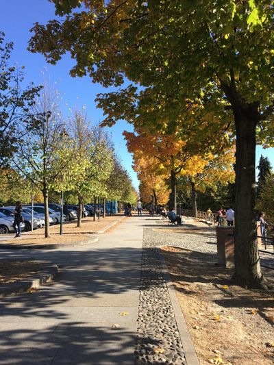 Superga, collina torinese. Tree Sunlight Shadow Autumn Day Outdoors No People Nature Sky Torino Superga (To) Colors Nofilter