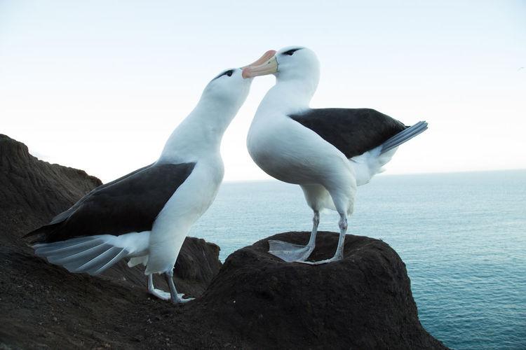 Two birds perching on rock by sea