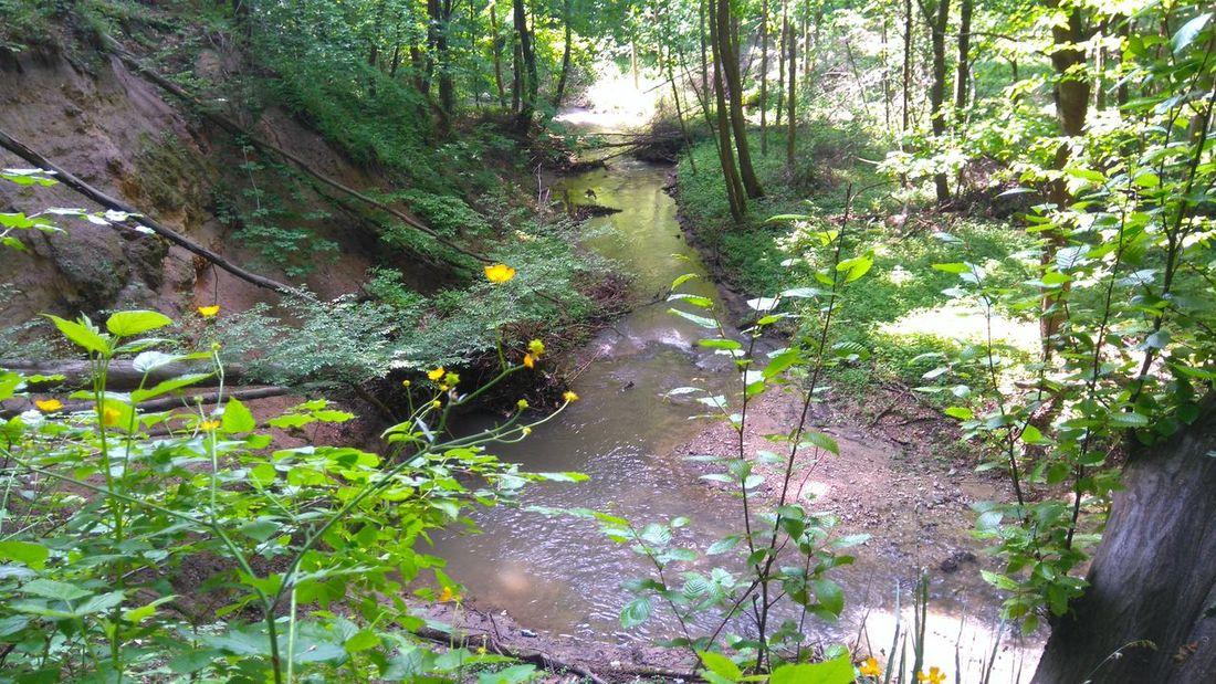 Nature Forrest Wood Las Stream Strumień Strumyk Flowers Kwiaty The Essence Of Summer The Great Outdoors - 2016 EyeEm Awards
