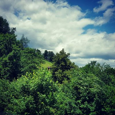 Windowview Summer Landscape Clouds Woods Trees