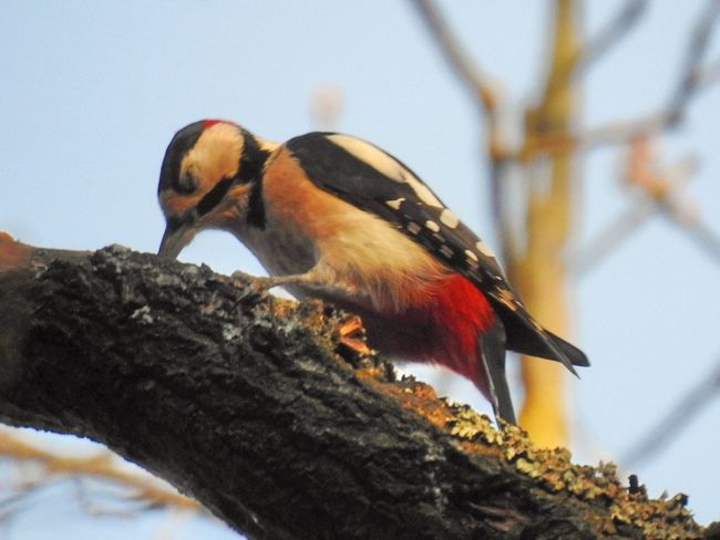 Bird Photography Nature Photography Animal Themes Animal Wildlife Animals In The Wild Beauty In Nature Bird Birds_collection Branch Close-up Day Focus On Foreground Forest Low Angle View Nature Nature_collection Naturelovers No People One Animal Outdoors Perching Sky Tree Wood Pecker